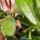 Kondenzwasser auf den Blättern einer Pflanze