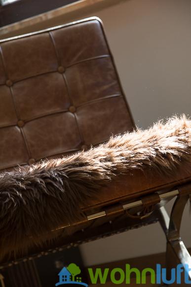Schön: Mittags strahlt die Sonne auf das Fell auf dem Sessel